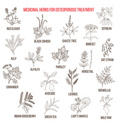 Best medicinal herbs for osteoporosis vector
