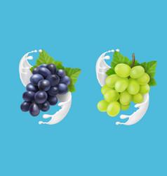 grape in milk splash or ice cream vector image