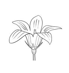 Vector drawing of flower on the white vector