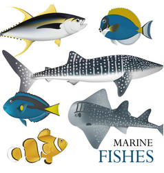 01 marine fish-02 vector image