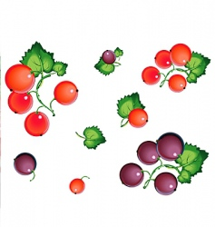 currants vector image vector image
