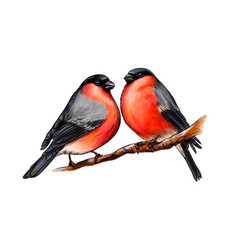 A pair beautiful winter birds bullfinches on vector