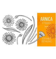 Arnica set hand drawn design elements vector