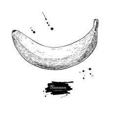 Banana drawing isolated hand drawn object vector