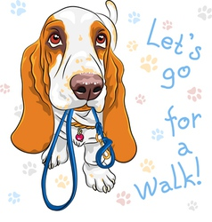 Dog Basset Hound breed wants to walk vector