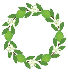 Lime Wreath vector image