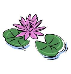 purple lotus flower on white background vector image