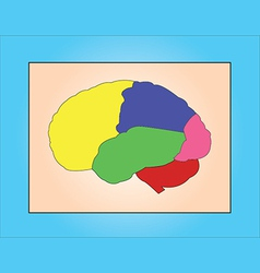 Brain samples vector