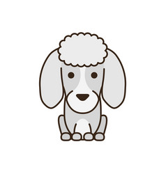 Cute little dog french poodle fill style icon vector