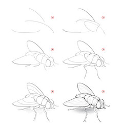 How to draw sketch fly creation step step vector