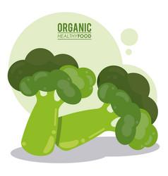 Organic healthy food broccoli vegetable vector