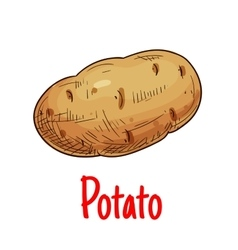 Potato tuber vegetable sketch icon vector