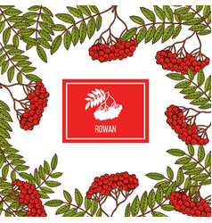 rowan icon in the frame vector image vector image