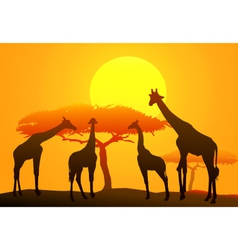 Sunset and giraffe in Africa vector image vector image