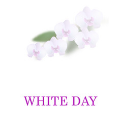 greeting card white day beautiful orchid flowers vector image