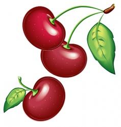 09 cherry vector