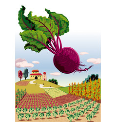 Agricultural landscape with beetroot vector
