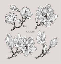 Ink pencil leaves and flowers magnolia vector