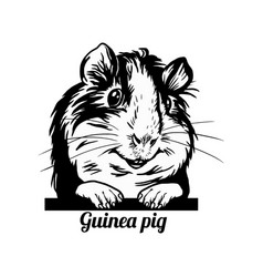 Peeking guinea pig - funny guinea pig peeking out vector