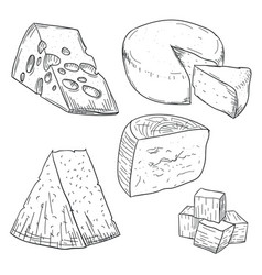 cheese collection doodle drawing on white vector image