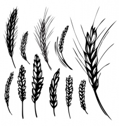 Rye wheat vector