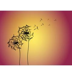Dandelion vector image