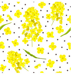 blossoming rapeseed flowers seeds leaf seamless vector image