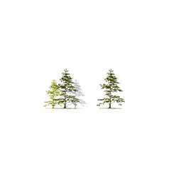 Cedar tree template set vector