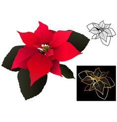 christmas poinsettia set vector image