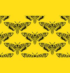 Butterfly deaths head hawk moth seamless pattern vector