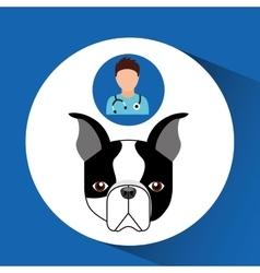 doctor cartoon veterinarian dog french bulldog vector image
