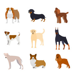 cartoon breed of dogs collection icons vector image