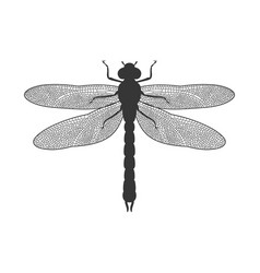 silhouette of dragonfly vector image vector image