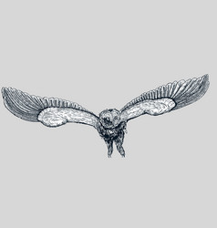 hand drawn doodle owl vector image