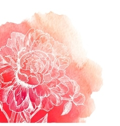 white ink drawn peony on red watercolor vector image