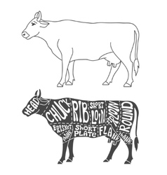 Beef cuts diagram vector image