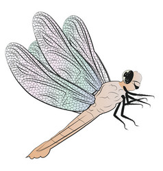 dragonfly detailed vector image