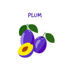 ripe tasty plum on a white background vector image