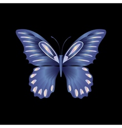 pearl Lace butterfly on black background vector image vector image