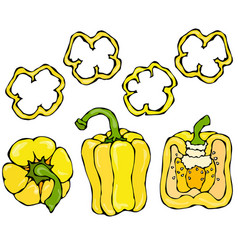 yellow bell peper set half of sweet paprika and vector image