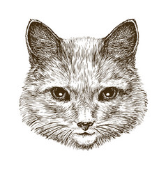 cute kitten cat pet animal sketch vintage vector image