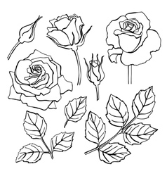 set of hand-draw line rose collection vector image vector image