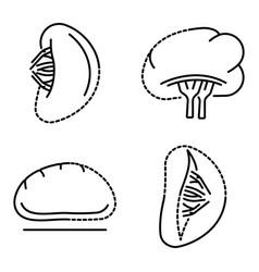 spleen icon set outline style vector image