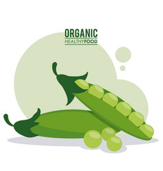 organic healthy food peas pod green vector image