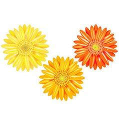 Yellow And Orange Gerbers vector image