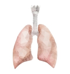 Realistic polygonal lungs vector
