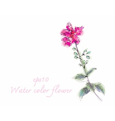 Water color flower on white background vector