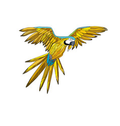 a flying parrot with yellow vector image vector image