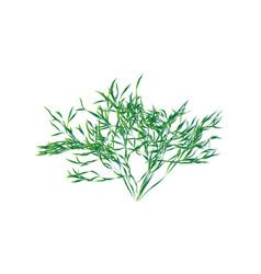 green shrub isolated vector image