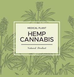 cannabis sketch background hemp branches vector image